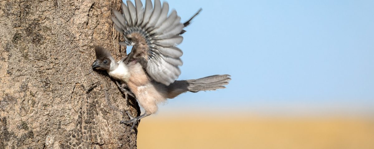 Bird on tree flapping wings
