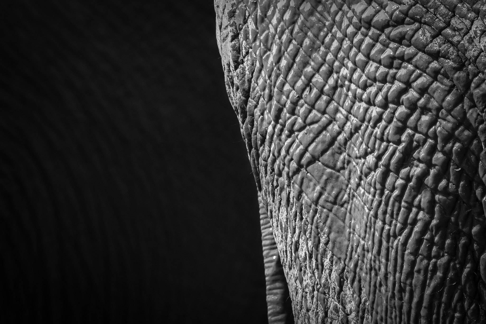 Close up of rough elephant skin