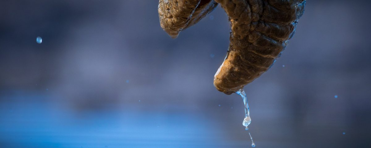 A water drop falls from an elephants trunk