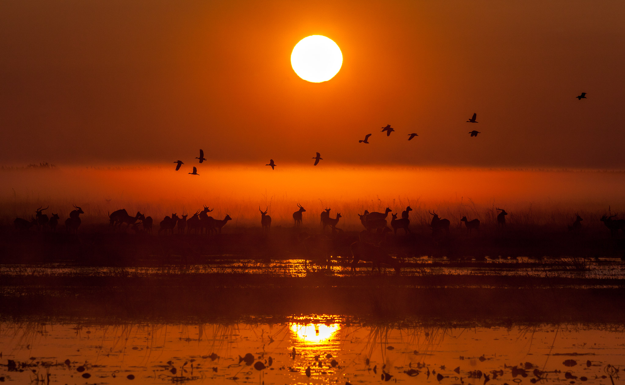 Sunrise over a wetland with antelope and bird silhouettes