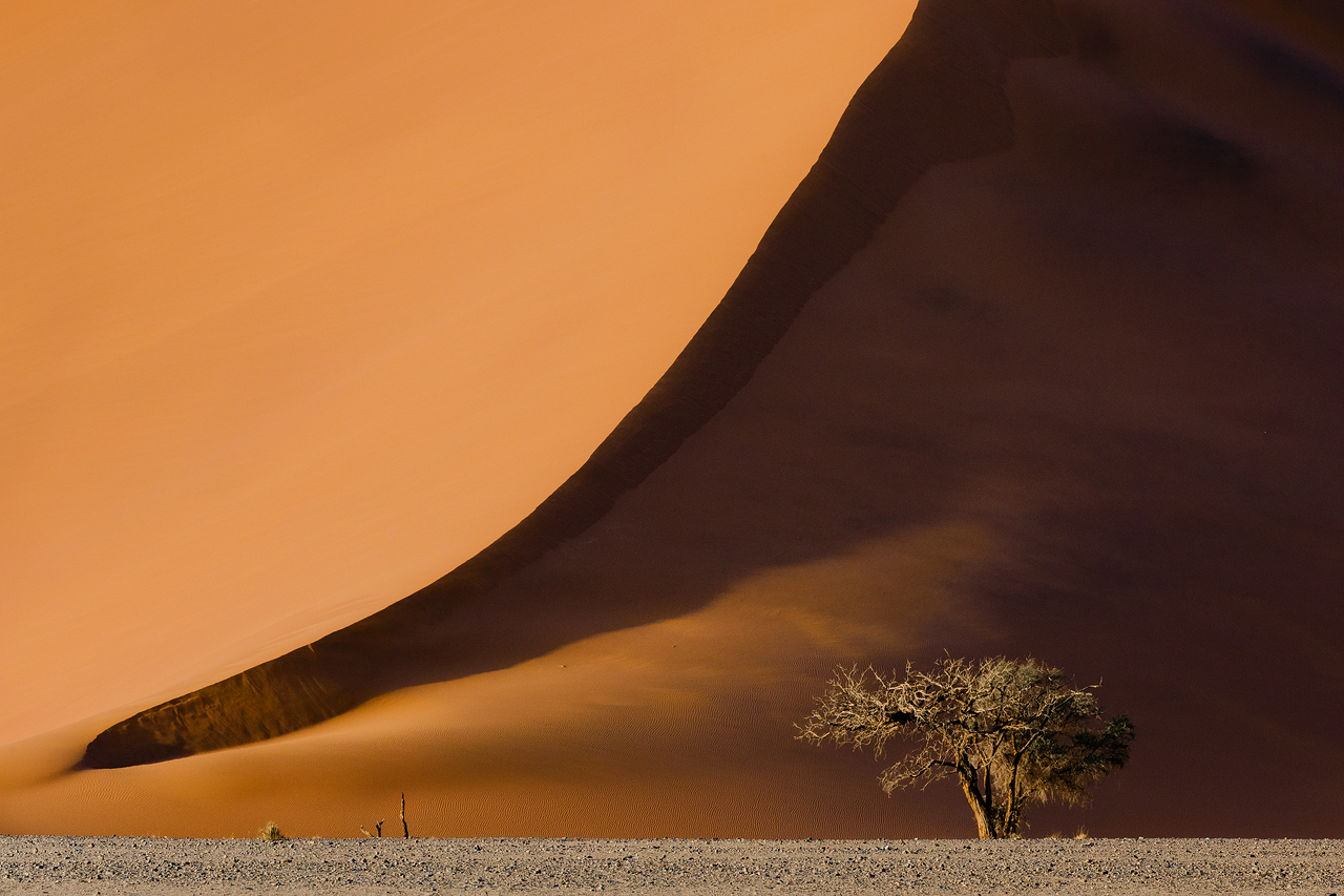 Sand dune in Namibia with small tree