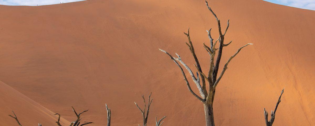 Dead trees in the desert in Namibia
