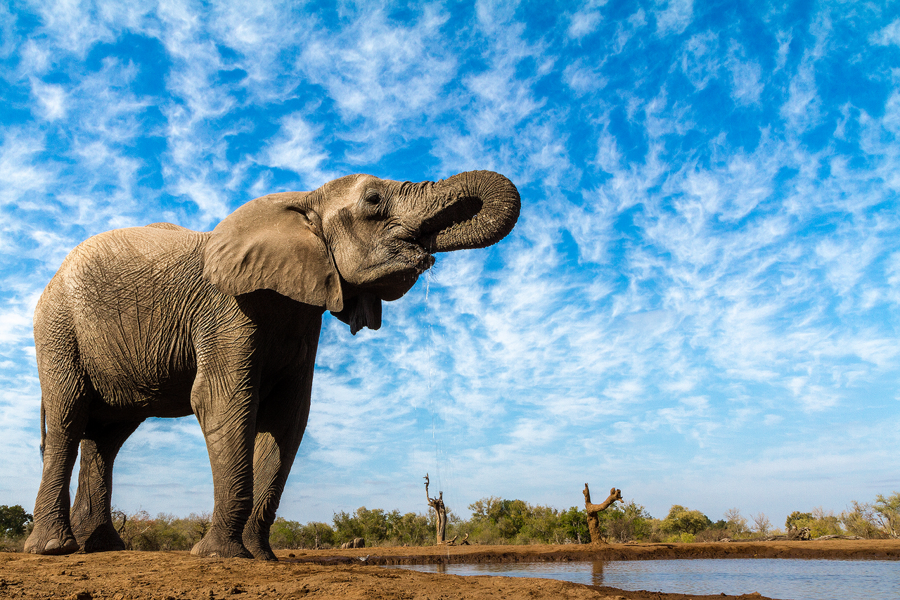 An elephant against blue sky and clouds