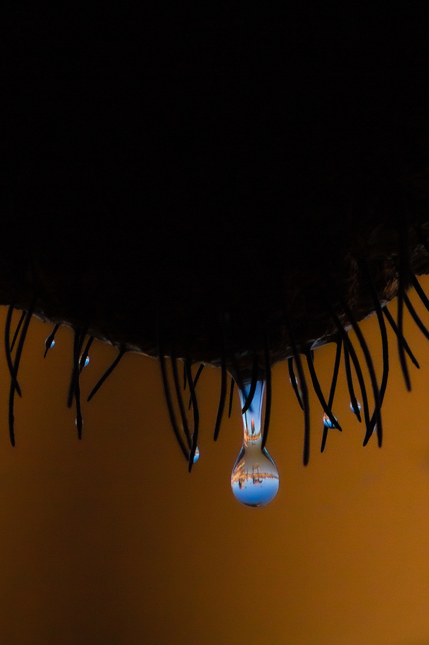 Elephants are reflected in a water drop on another elephants chin