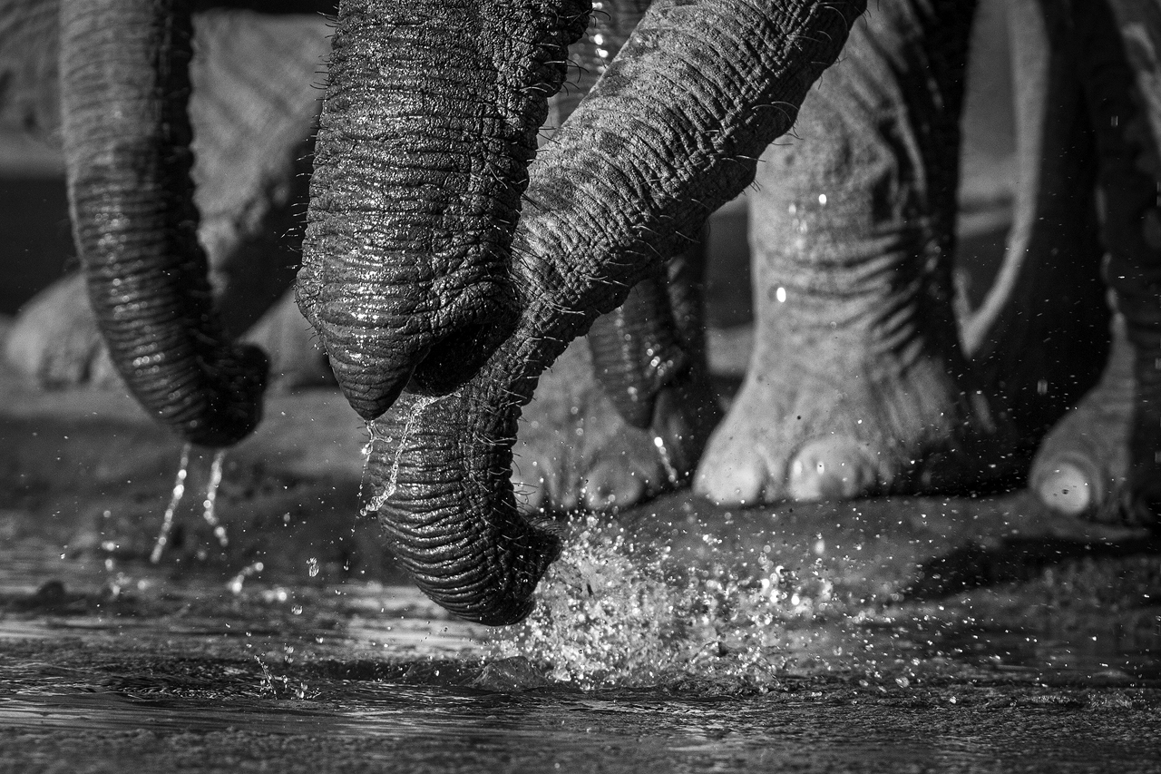 Black and white trunks and water