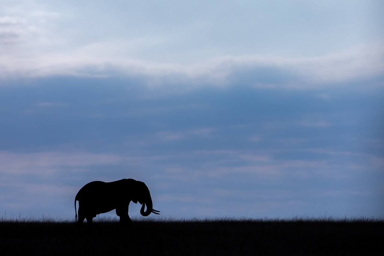 Silhouette of elephant against blue sky
