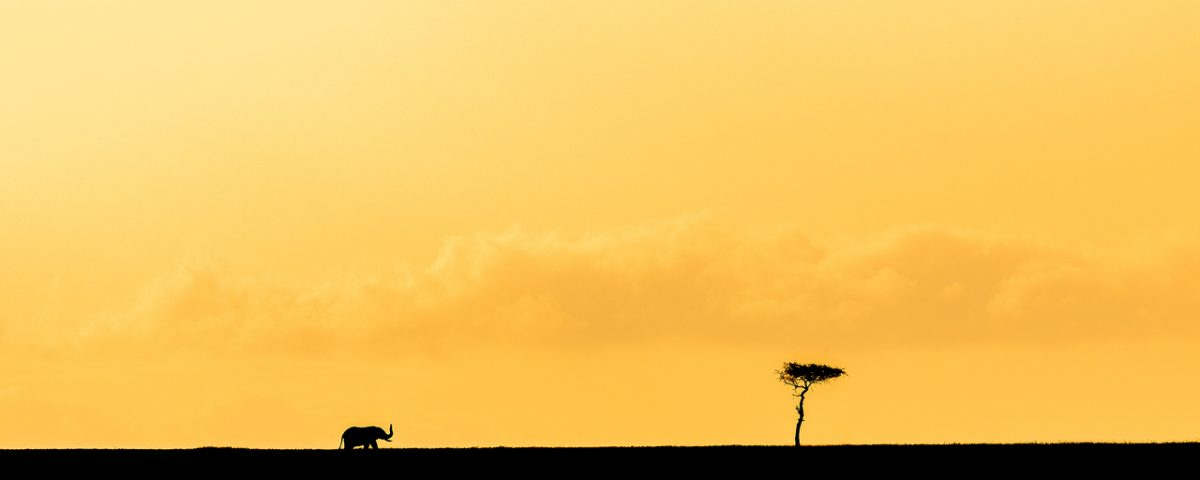 Silhouette of elephant against orange sky