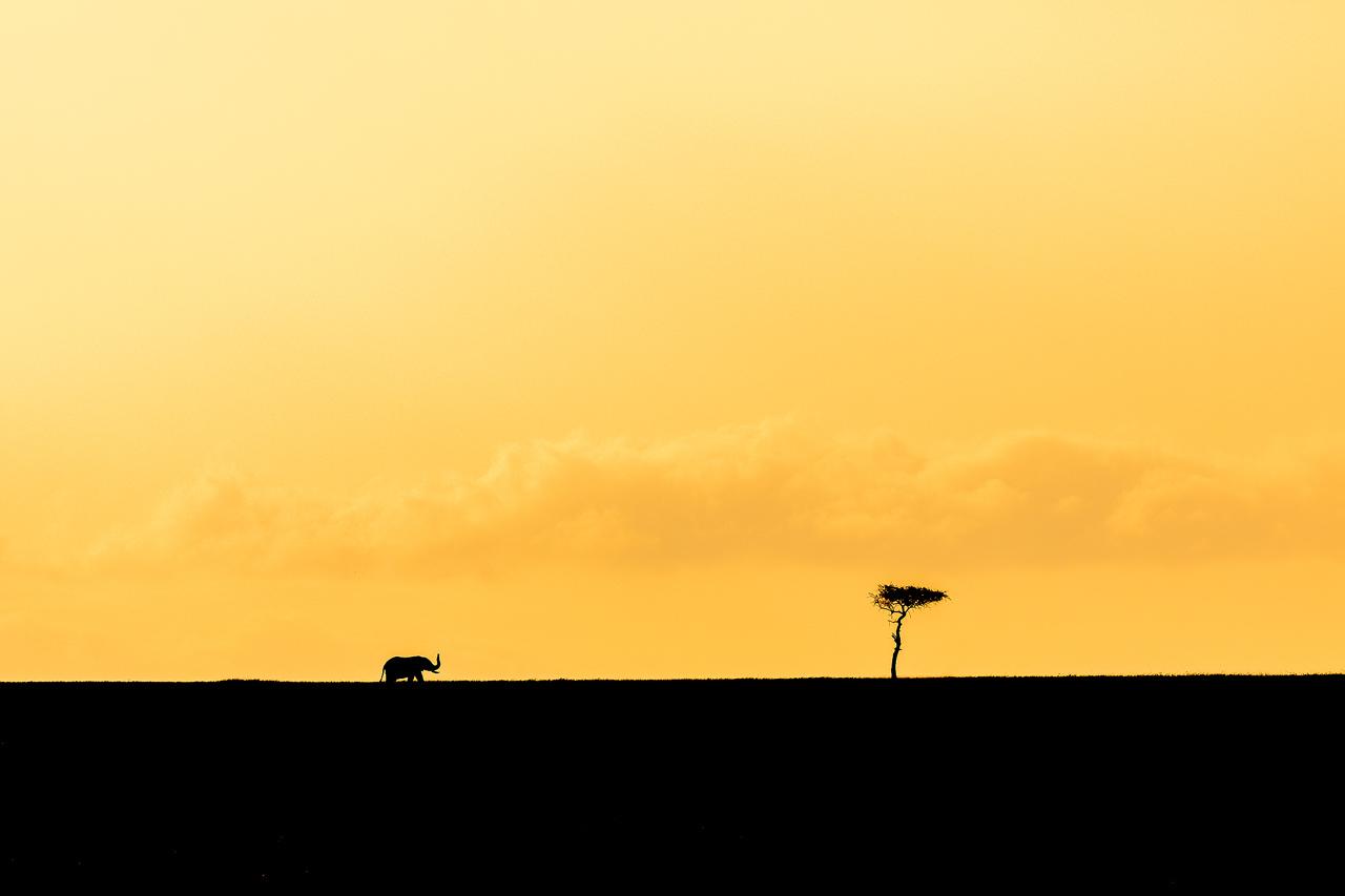 Silhouette of elephant against orange sky