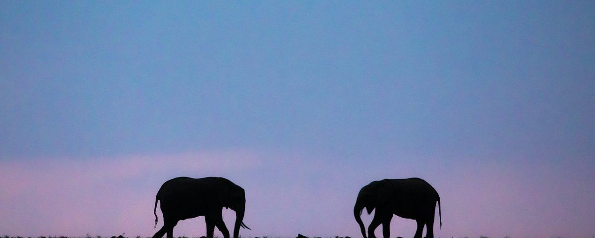 Two elephants silhouetted against a blue sky