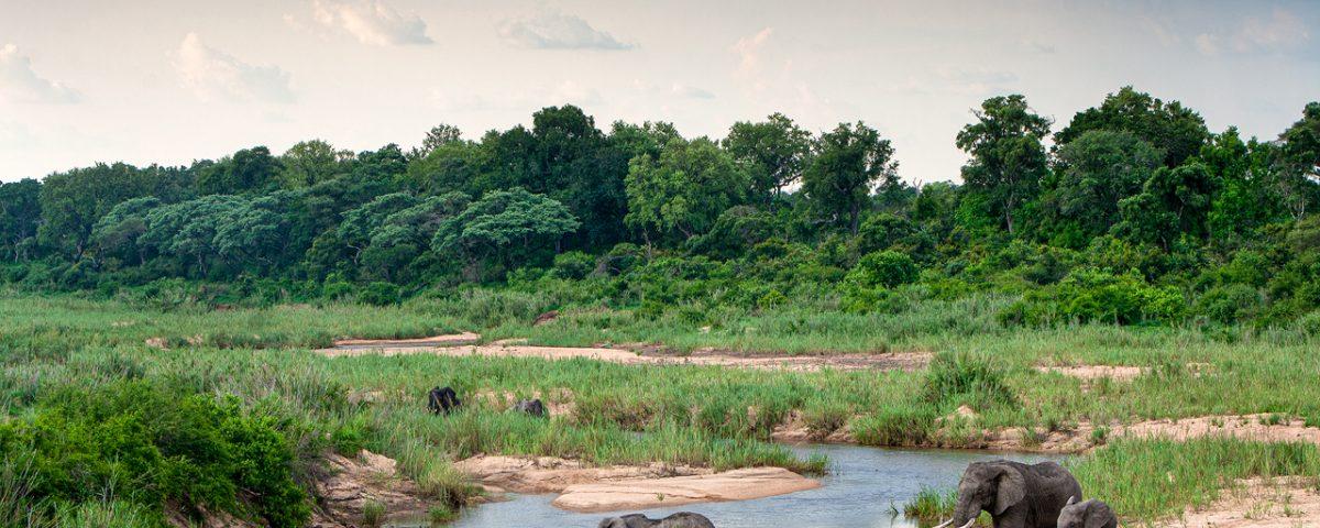 Herd of elephants crossing river