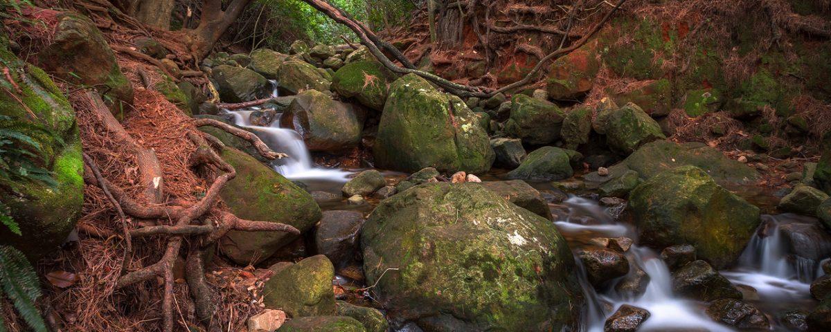 Rocky stream in green forest