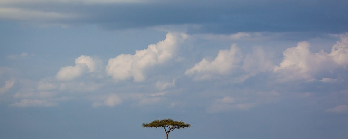 Single tree against the sky in Maasai Mara