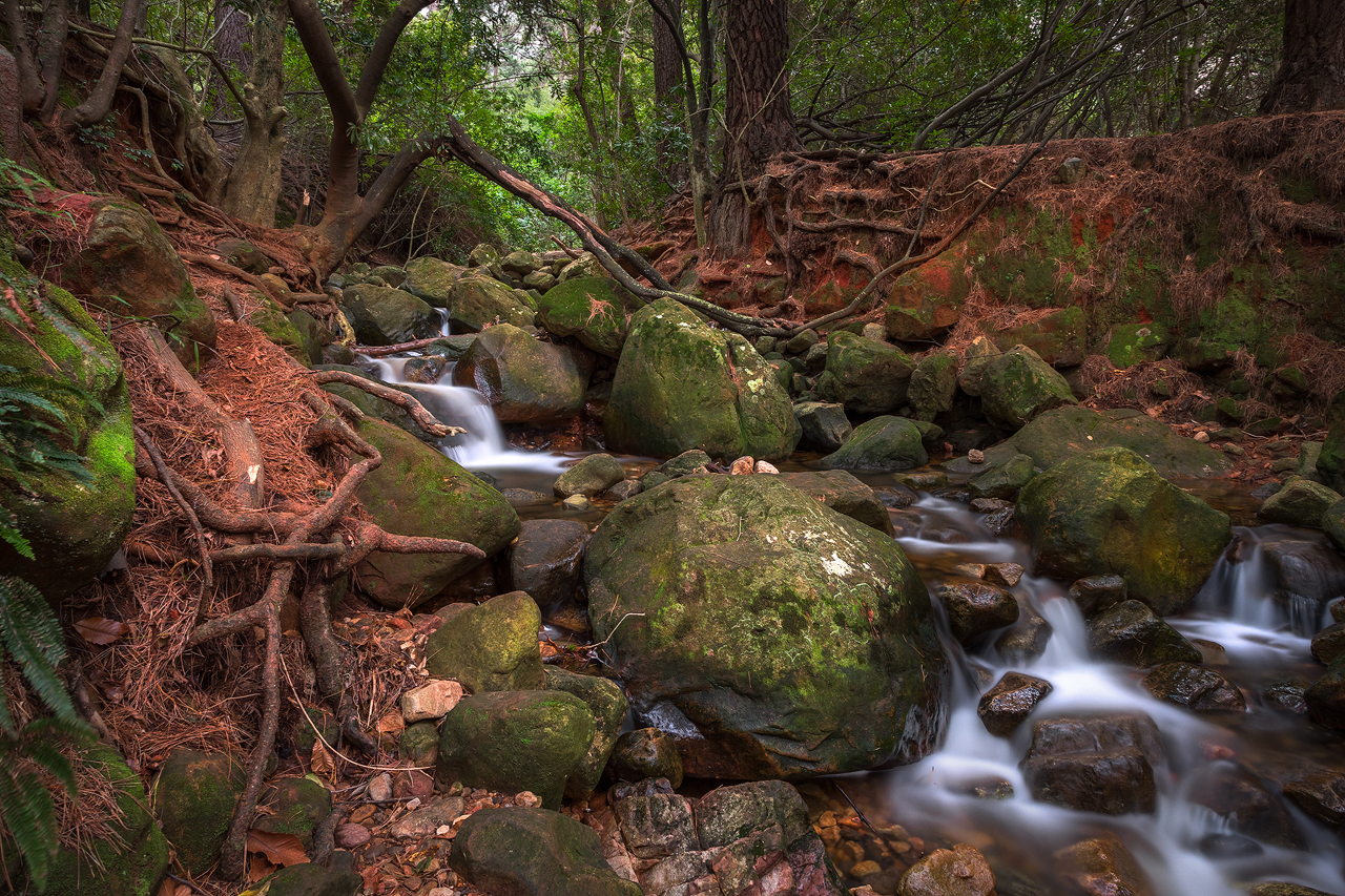 Rocky stream in green forest
