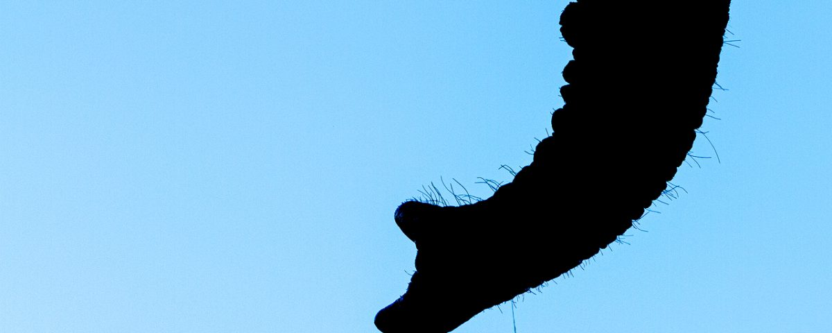 Silhouette of elephant trunk with water drop