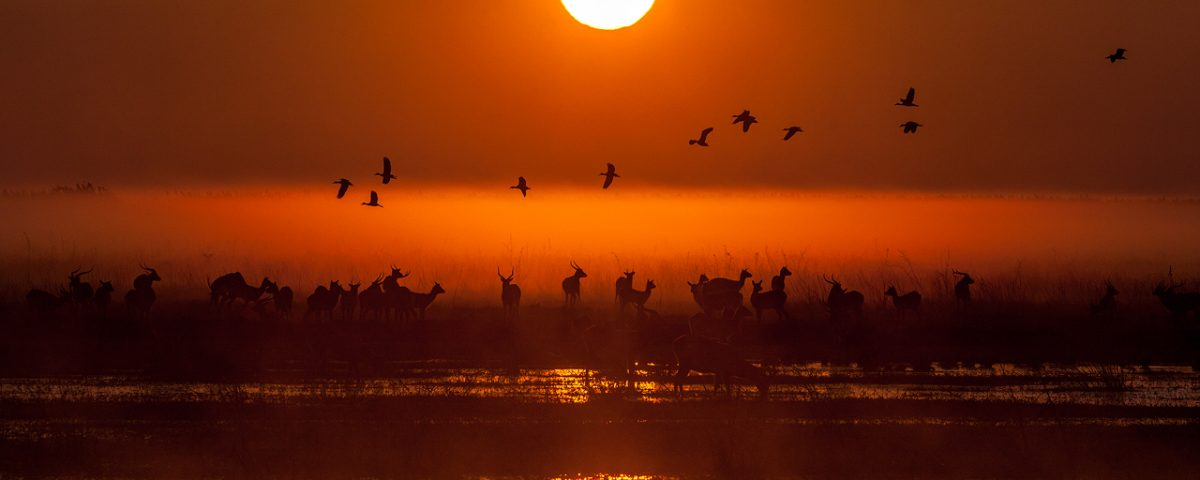 Sunrise over antelope, birds and water