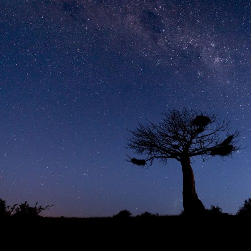 Baobab tree and milky way at night