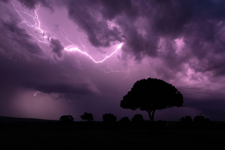Purple lightning in dark sky with tree silhouette