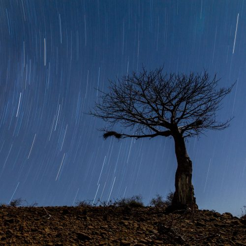 Baobab tree with star trails across the sky at night