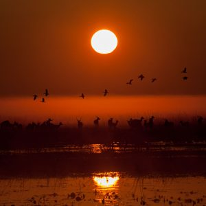Silhouette of birds and antelope at sunrise over water