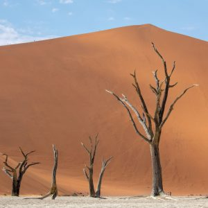 Dead trees against a sand dune backdrop at Deadvlei, Namibia