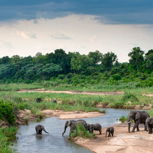 Landscape of elephants crossing river with big green trees
