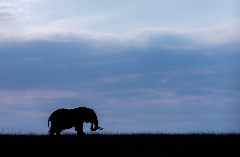 Silhouette of elephant against dark blue sky