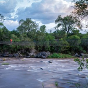Maasai man crossing river on a swing bridge