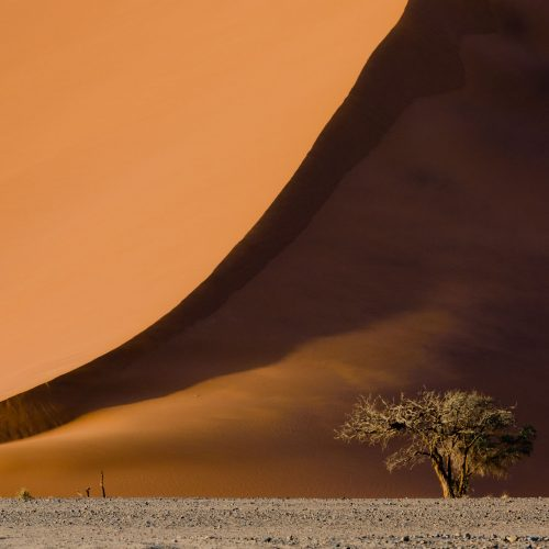 Tree in front of a sand dune