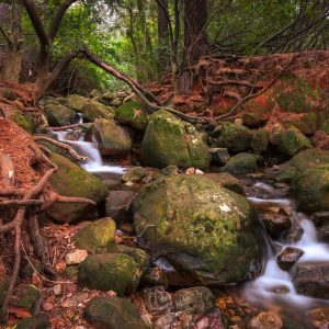 River flowing in a dark forest