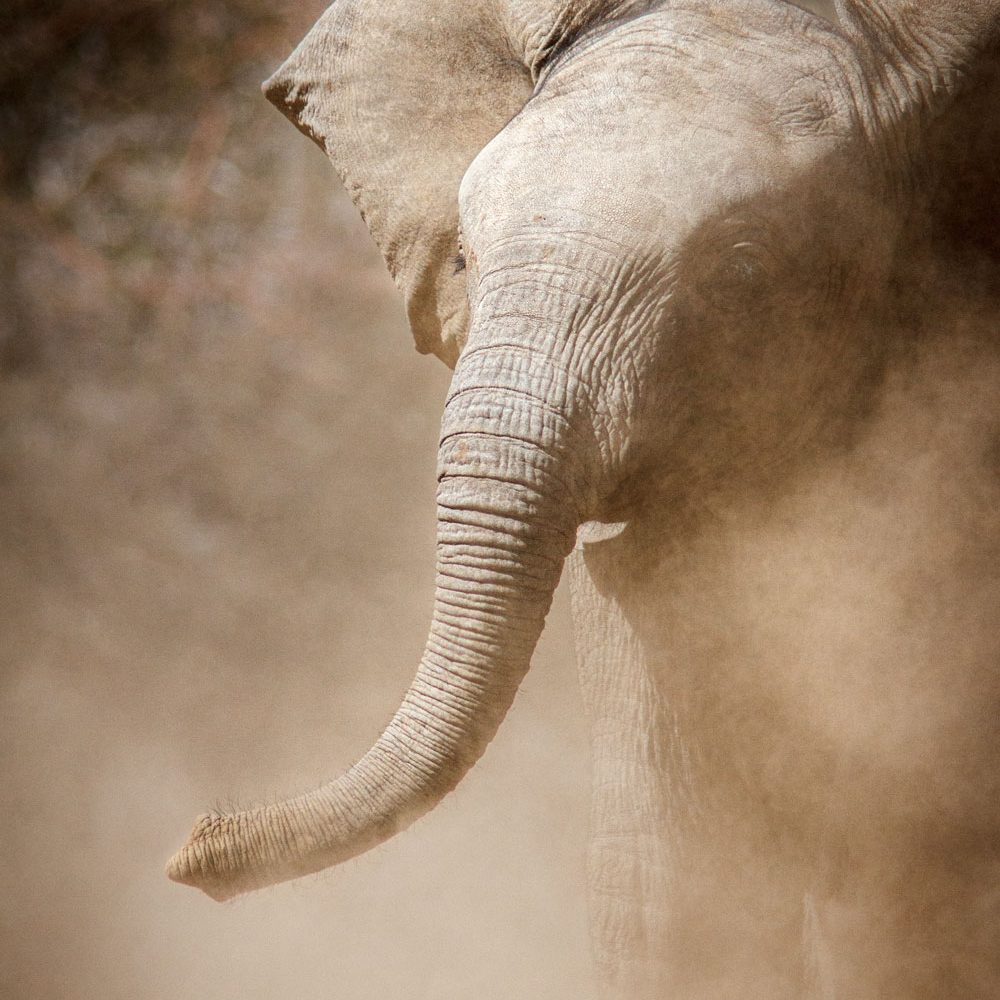 Elephant calf charges out of cloud of dust