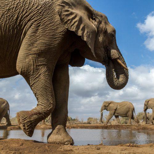 Herd of elephants walking around a waterhole