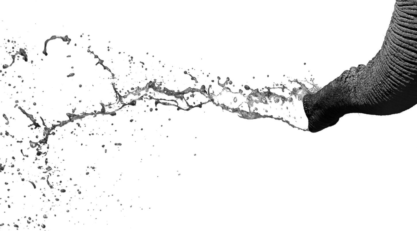 Elephant trunk sprays muddy water in black and white with white background