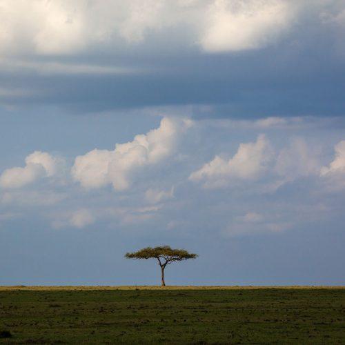 A single tree on a grassy plain against a bright cloudy sky