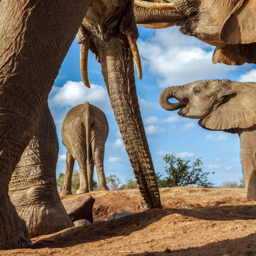 A herd of elephants from a very low angle